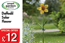 Daffodil Solar Flower – Now Only £12.00